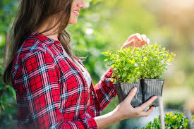 how to garden the best tips and tools for beginners