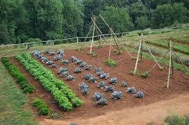 Veg Garden Ideas Veg Garden Rotating Vegetables Home Garden Crop Rotation Vegetable