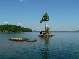 one tree island skeleton lake muskoka photo page everystockphoto