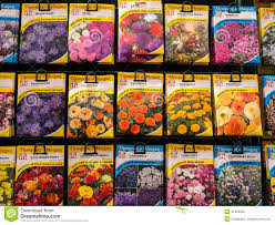 flower seed packets flower seed packets on sale editorial image image 42399320