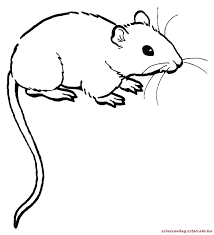 coloring page of a rat lab rats coloring pages rat coloring pages rat coloring pages mouse