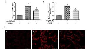 jia shen decoction medicated serum inhibits angiotensin ii induced