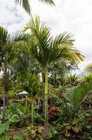 94 best plant palette palms images on pinterest palms palm