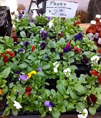 100 roof garden plants garden trees the roof garden