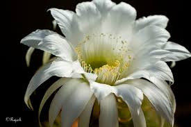 list of flower names and pictures laura williams