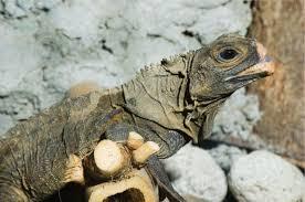 assessing reptile welfare using behavioural criteria in practice
