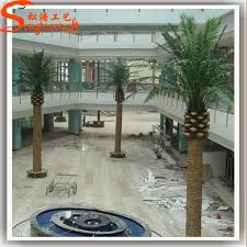 Indoor Tropical Plants For Sale - available for export all types of palm trees indoor tropical