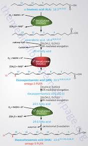 omega 3 u0026 omega 6 fatty acid synthesis metabolism functions