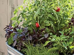 small veggie garden ideas sunset
