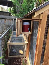 les trois poulettes backyard chickens