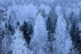 image frosted trees at daybreak stock photo by jf maion