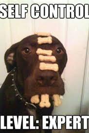 Sad Dog Meme - dog memes picmia