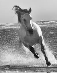 white mustang horse wind swept manes horse photography collection jody l miller