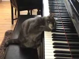 Cat Playing Piano Meme - cat playing piano like beethoven nora youtube