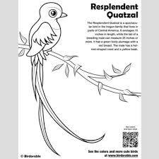 green coloring page cute bird coloring pages by birdorable free downloads