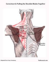 Anatomy Of The Shoulder Girdle Overcoming Chronic Neck Pain Postural Causes And A Unique