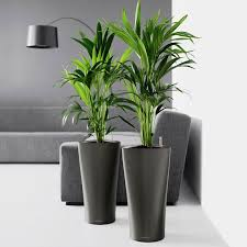 decorative indoor planters design ideas u2014 biblio homes top