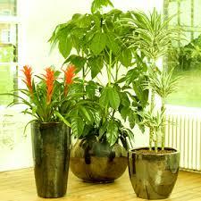 Live Indoor Plants | buy indoor plants online at nursery live largest plant nursery in