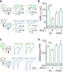 investigation of synapse formation and function in a glutamatergic