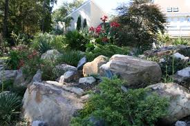 Rock Gardens On Slopes Eco Terra Landscape Consultants