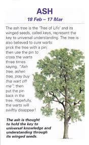 464 best gardening plants images on pinterest ash tree