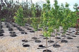 jeffries nurseries tour of pot in pot production