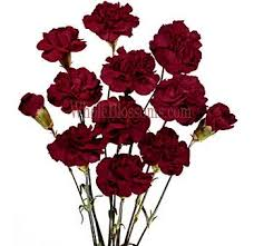 wholesale carnations burgundy mini carnation flowers wholesale carnations wedding