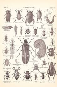 free coloring pictures of insects to print