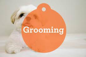 1 week old bichon frise bichon frise grooming phobia petcha