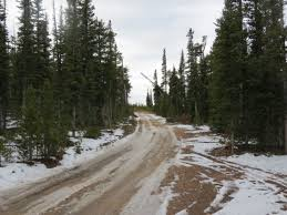 national forest christmas tree permits available
