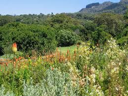 Kirstenbosch National Botanical Gardens by Kirstenbosch Botanical Gardens Cape Town Wildlife Insight