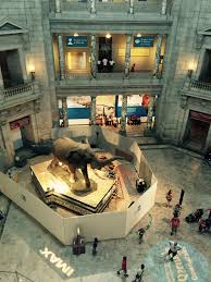 Kitchen Images With Islands by Smithsonian National Museum Of Natural History Rotunda Elephant