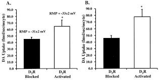 dopamine d2 receptor regulation of the dopamine transporter