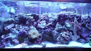Live Rock Aquascaping Ideas Past Perfect Future Fantastic Reef2reef Saltwater And Reef