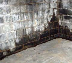 How Do You Get Rid Of Mold In A Basement by How To Get Rid Of Black Mold In Basement Tips To Remove From Walls