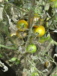 Plant Diseases Identification - plant diseases how to identify them in your garden life with