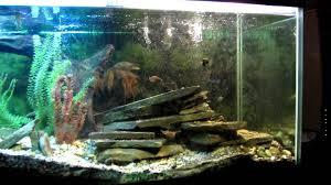 kentucky native plants my 180 gallon native fish tank youtube