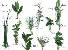 plantes cuisine plantes aromatiques en cuisine labonnetable actualités billets