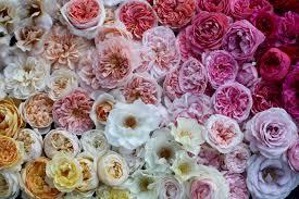 Cut Flower Garden by Floret Flowers We Are A Small Family Farm In Washington U0027s Skagit
