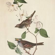 vintage images victorian art botanical prints audubon birds