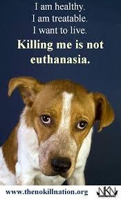 dog euthanasia best 25 animal euthanasia ideas on animal rights