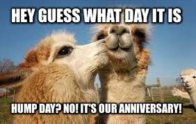 Anniversary Meme - hey guess what day it is hump day it is hump day no our