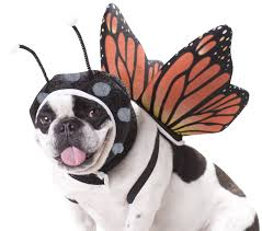 dog halloween costumes images amazon com animal planet pet20101 butterfly dog costume medium