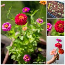 flower garden plans for beginners patio cutting gardens for beginners peanut blossom