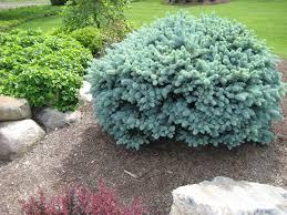 Decorative Shrubs 62 Best Central Oregon Plant U0026 Tree Ideas Images On Pinterest