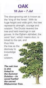 celtic sacred trees rowan mountain ash magick trees pinterest
