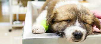 Sick Puppy Meme - one sick puppy 7 puppy illnesses to look for care com community