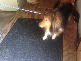 belgian shepherd nova scotia ask a dog trainer how do i teach my dog to load into the car