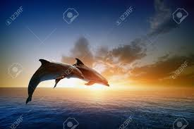 Dolphin Rugs Couple Jumping Dolphins Beautiful Sea Sunset Stock Photo Picture