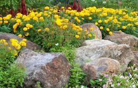 flower gardens with rocks